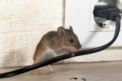 Pest Control in Friern Barnet, New Southgate, N11. Call Now! 020 8166 9746