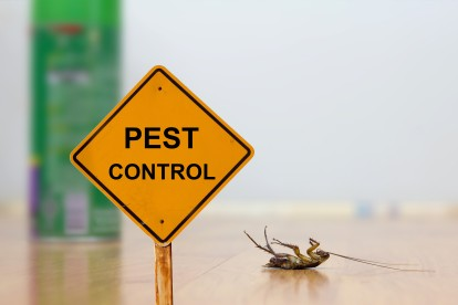 Pest Contol in Friern Barnet, New Southgate, N11. Call Now 020 8166 9746