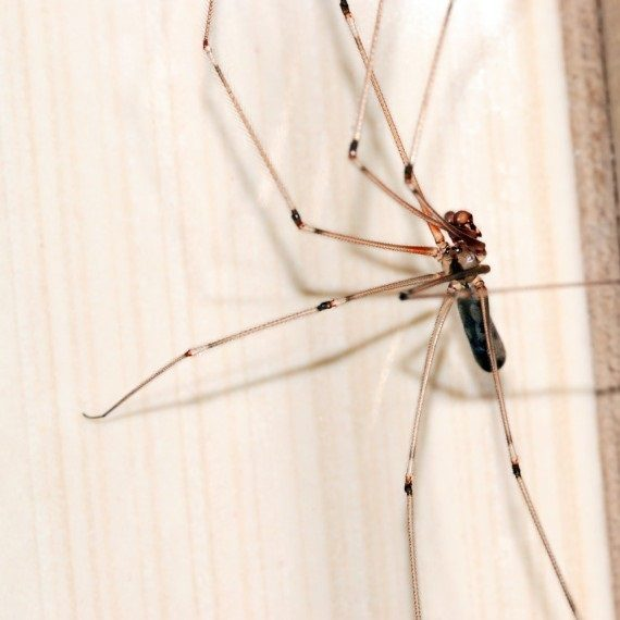 Spiders, Pest Control in Friern Barnet, New Southgate, N11. Call Now! 020 8166 9746